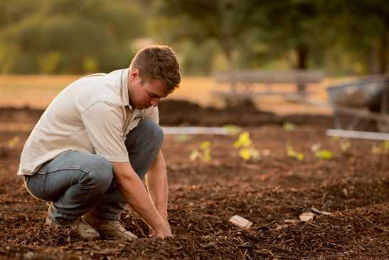 Gardener, in a fall garden. He is planting pumpkins.